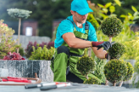 Tree Service and Landscaper Oakland Tree in Oakland CA